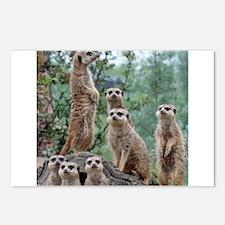 Meerkat010 Postcards (Package of 8)