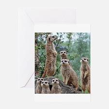 Meerkat010 Greeting Cards
