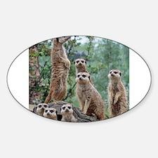 Meerkat010 Decal