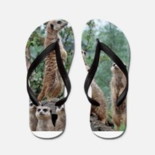 Meerkat010 Flip Flops