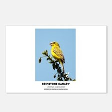 EXOTIC BIRDS - BRIMSTONE Postcards (Package of 8)