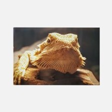 Unique Bearded dragons Rectangle Magnet