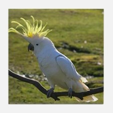 Yellow Sulphur-Crested Cockatoo from Tile Coaster