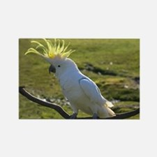 Yellow Sulphur-Crested Cockatoo f Rectangle Magnet