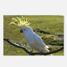 Yellow Sulphur-Crested Co Postcards (Package of 8)