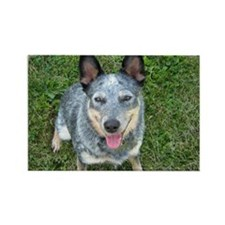 Blue Heeler Rectangle Magnet