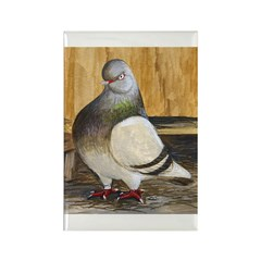 Barred Flight Pigeon Rectangle Magnet (10 pack)