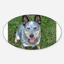 Blue Heeler Oval Decal