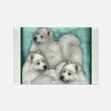 Samoyed Dogs Magnets