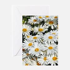 Cute Daisies Greeting Card