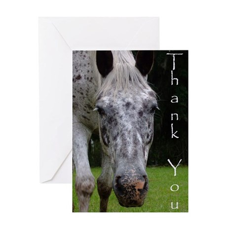 AppaloosapicTY Greeting Cards