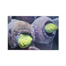 Atlantis Eel Magnet