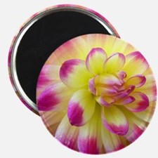 Cool Pink dahlia Magnet