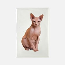 Funny Sphynx cats Rectangle Magnet