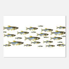 Zebrafish Postcards (Package of 8)