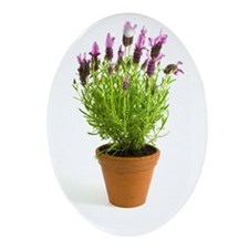 Lavender Oval Ornament