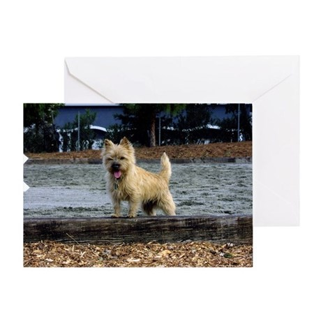 Young Cairn Terrier Greeting Card