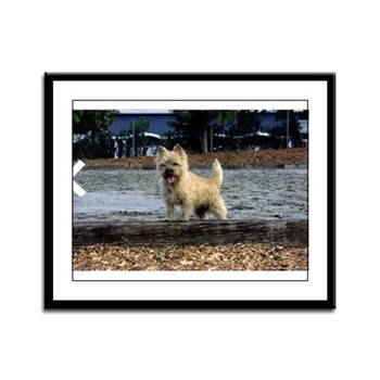 Young Cairn Terrier Framed Panel Print