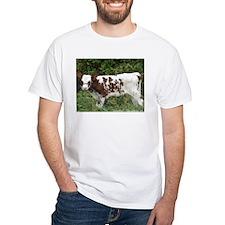 Ayrshire Cows Shirt