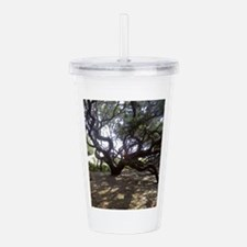 Large Live Oak on Cumb Acrylic Double-wall Tumbler