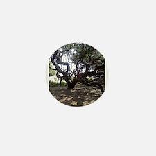 Large Live Oak on Cumberland Island Mini Button