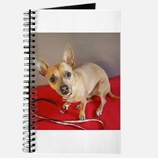 Chihuahua Journal