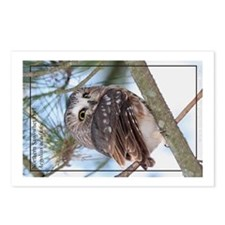 Saw-whet Owl Postcards (Package of 8)