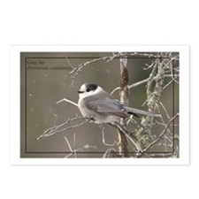 Gray Jay Postcards (Package of 8)