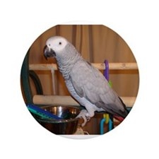 """African Grey 3.5"""" Button (100 pack)"""