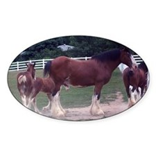 """Clydesdale horses"" Oval Decal"