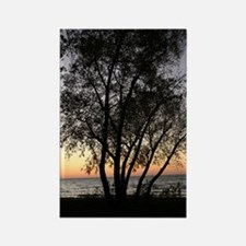 Silhouetted Tree at Sunset Rectangle Magnet