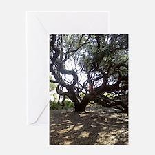 Cute Live oak Greeting Card