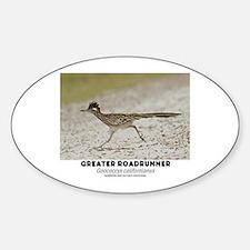 GREATER RADRUNNER - GEOCOCCYX CALIFORNIUS Decal