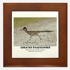 GREATER RADRUNNER - GEOCOCCYX CALIFORN Framed Tile