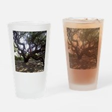 Unique Live oak Drinking Glass