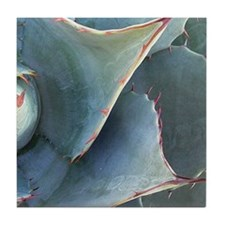 Agave Cactus Mosaic #2 (2 of 2)