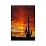 Saguaro Sunset Rectangle Magnet (10 pack)