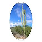 Tall Saguaro Oval Sticker