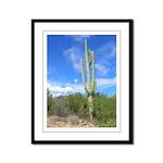 Tall Saguaro 11