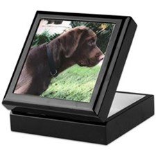 Chocolate Labrador Box