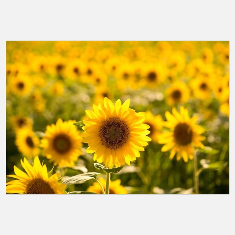 Sunflower Wall Art sunflower wall art | sunflower wall decor