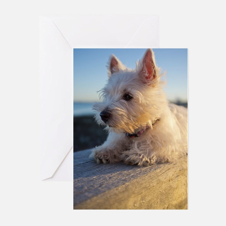 West Highland Terrier puppy on wood Greeting Cards