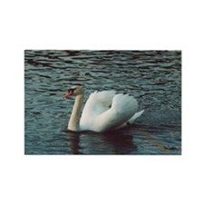 Mute Swan Rectangle Magnet