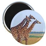 Three Giraffes Magnet
