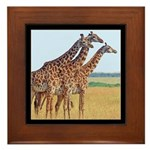 Three Giraffes Framed Tile