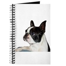 Boston Terrier - Pleading Eye Journal