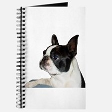 Boston Terrier - Pleading Eye Journal