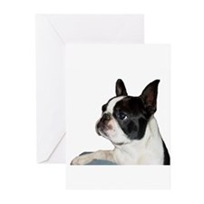 Boston Terrier - Pleading Eye Greeting Cards (Pk o