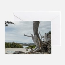 Carmel Beach Treescape Greeting Cards
