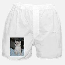 burmese platinum kitten Boxer Shorts